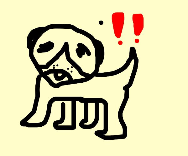 Pug!!