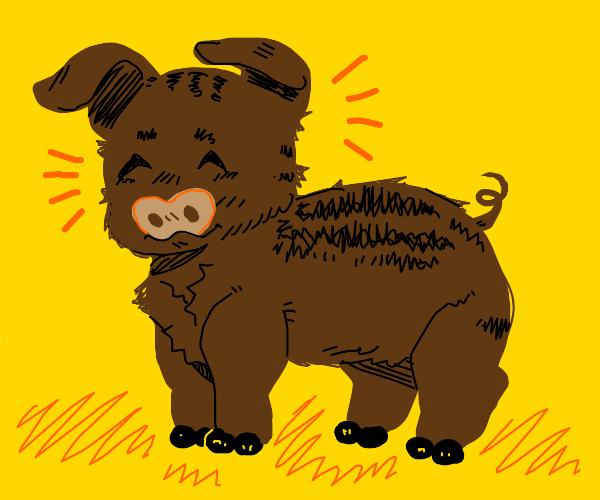 Cute brown pig