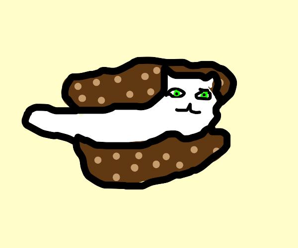cat icecream sandwich