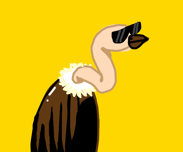 Vulture with Sunglasses