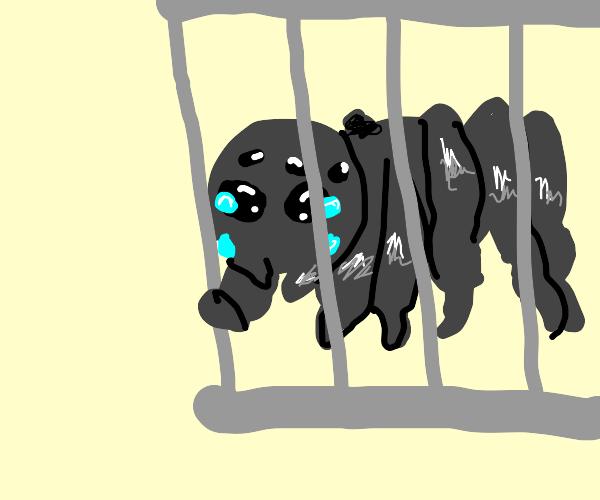 Sad spider locked behind bars