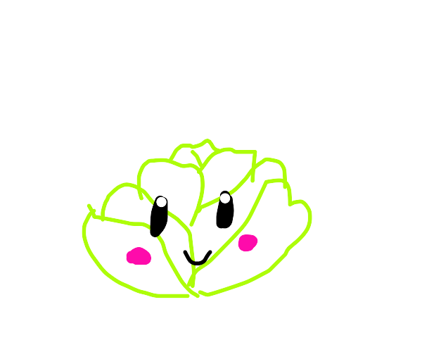 a cute head of lettuce