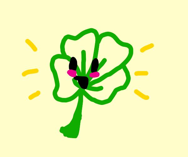 Four leaf Clover (lucky!)