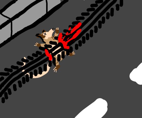 virginia opossum run over by car