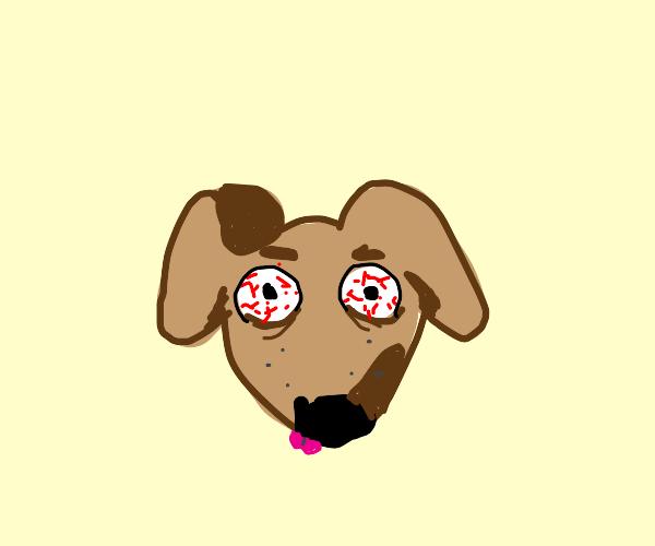 Dog with intense eyes