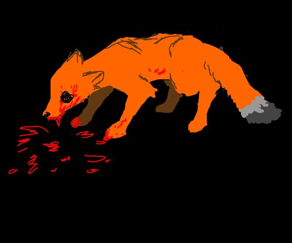Killer Foxes