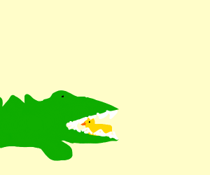 crocodile with tiny eye bites black duck