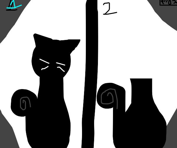 Black cat randomly loses his head