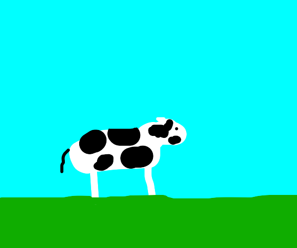 cow on a field