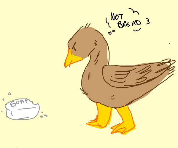 brown duck does not enjoy soap