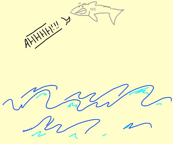 shark jumps too high