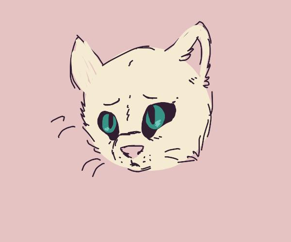 saddened cat