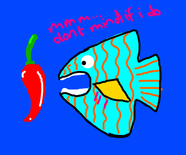 Tropical fish about to taste a chili