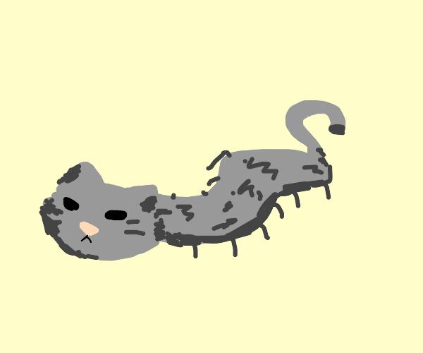Catipede