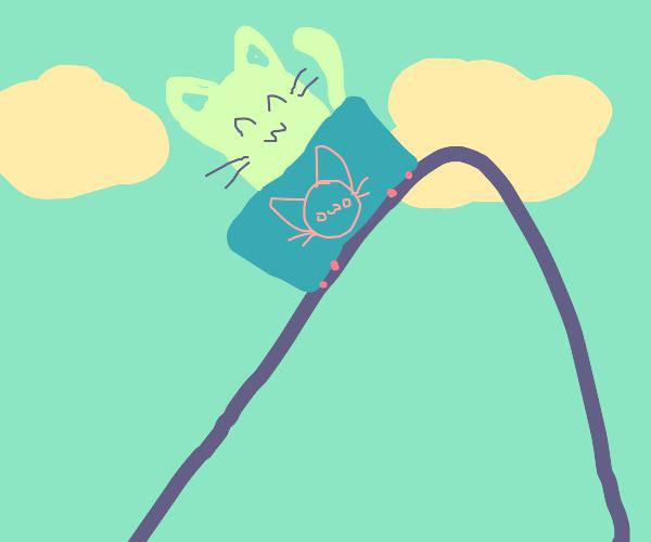 A cat in a Roller Coaster