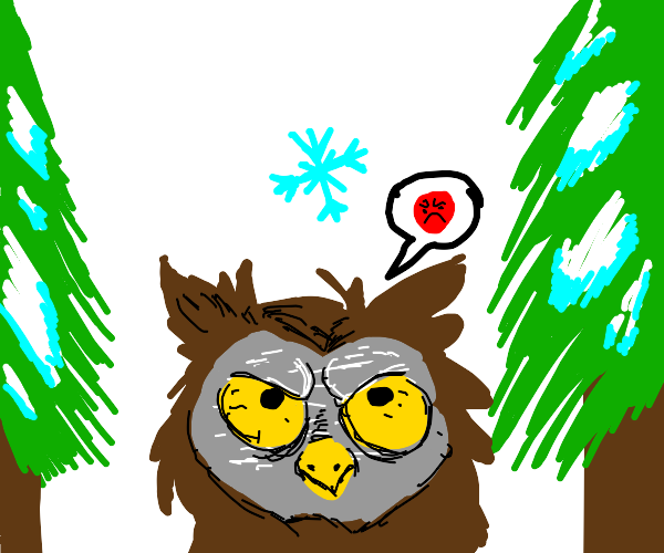 Owl angry about winter