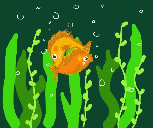 Kissy fish that looks like Yin-Yang symbol