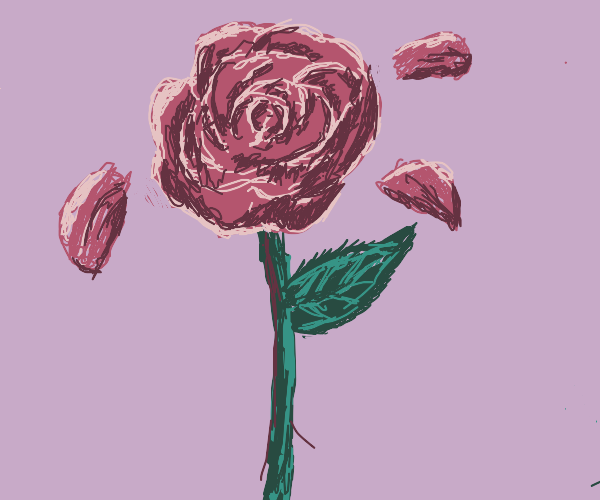 Rose with floating petals