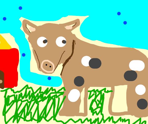 A cow on a farm