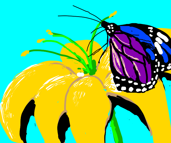 a butterfly pollinates a yellow flower