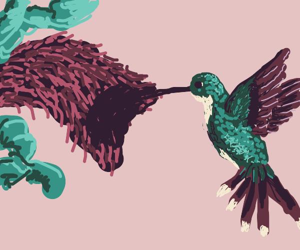 Humming Bird flies to flower