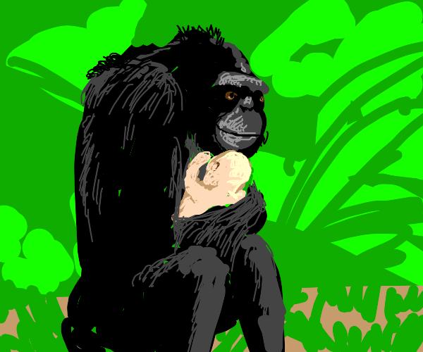 A monkey adopt a baby human