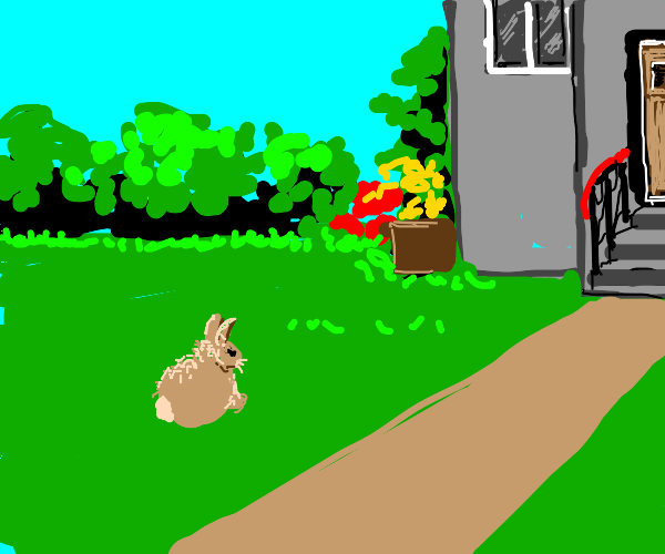 a rabbit on a lawn