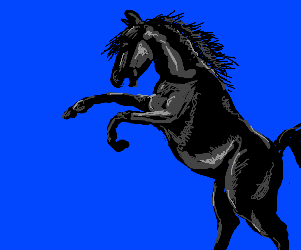 majestic black horse does that stand up thing