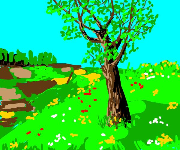tree on a beautiful dau