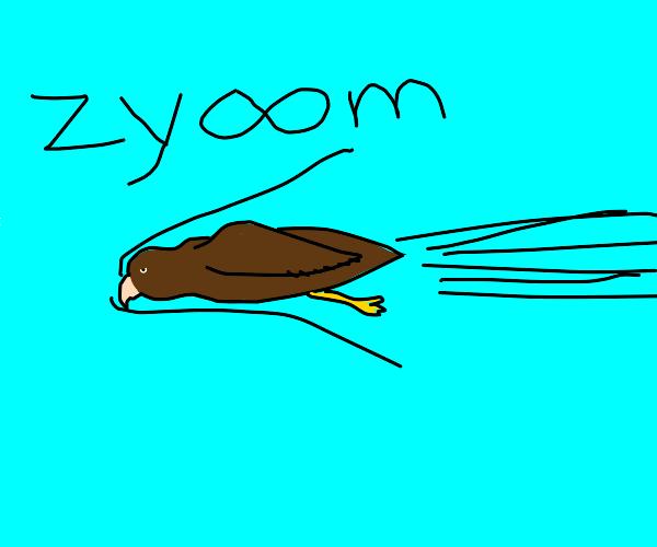 Birds zyooms through the air