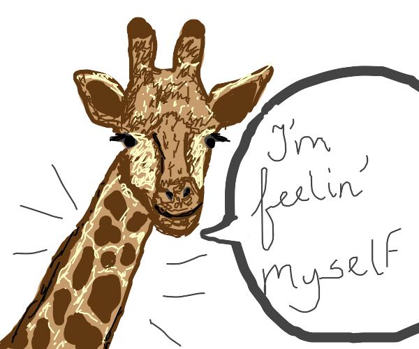 giraffe has a nice neck
