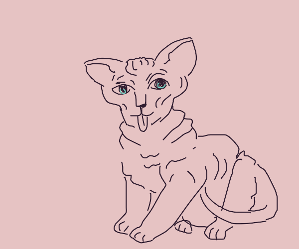 a sphnix cat sticking its tongue to be cute
