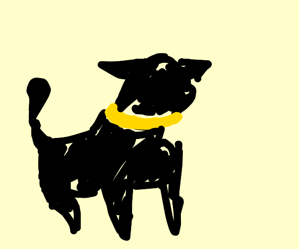 black cat with yellow collar