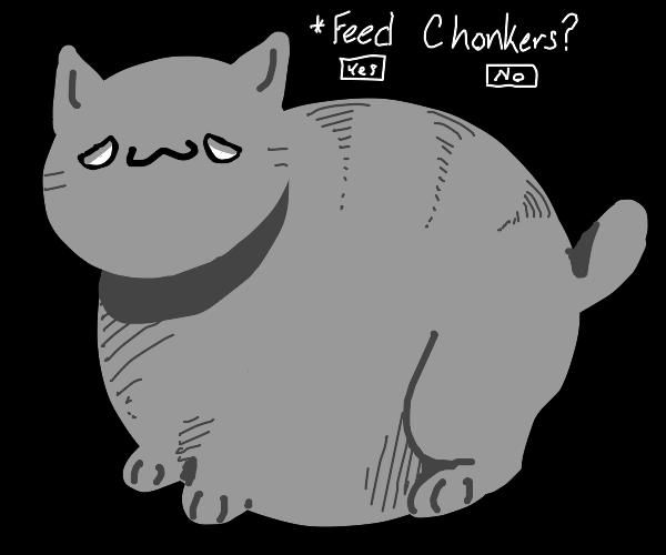 HUGE CHUNKY CAT!
