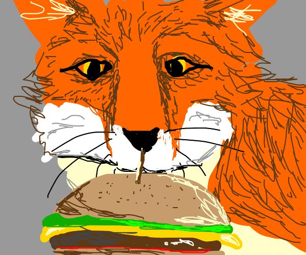 Fox stares at cheeseburger