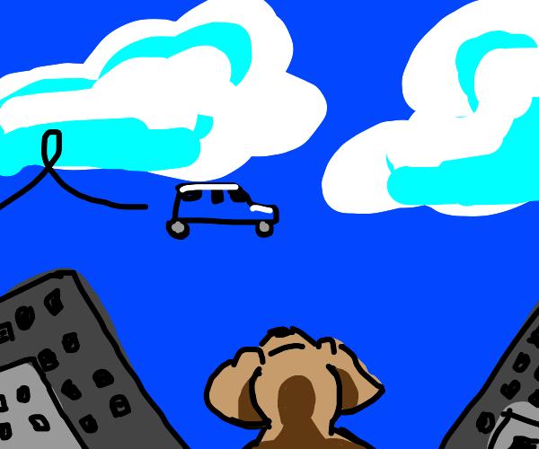 Dog looking at flying car