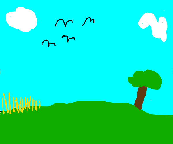 Birds in a field.