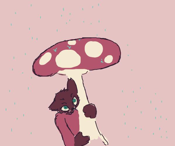 Cat uses mushroom as umbrella