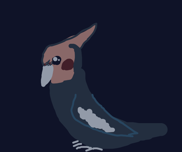 lil cockatiel