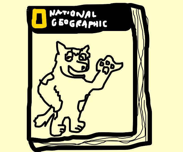 national furry geographic magazine
