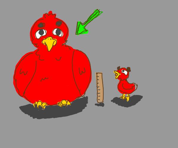 Enormous Bird