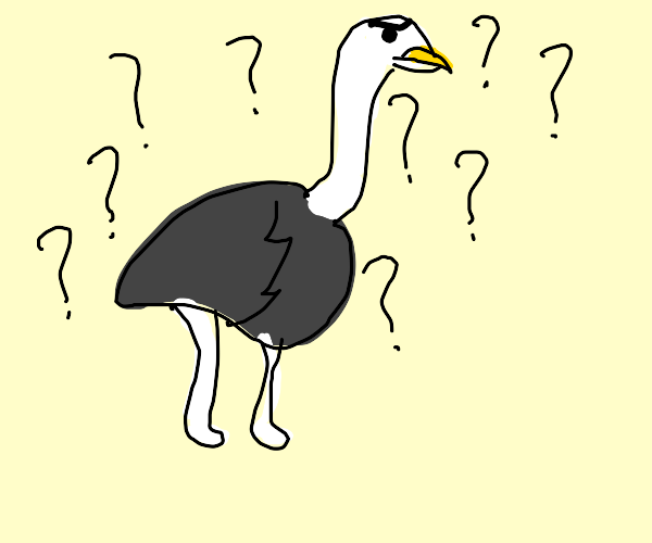 a very confused ostrich