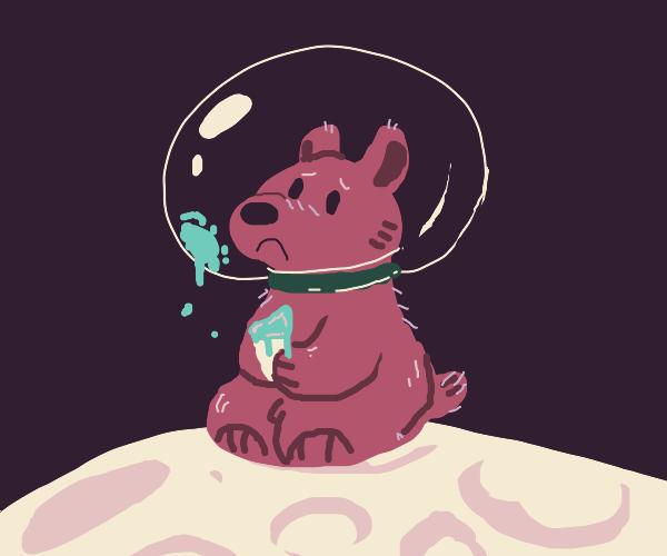 bear on moon eating ice cream