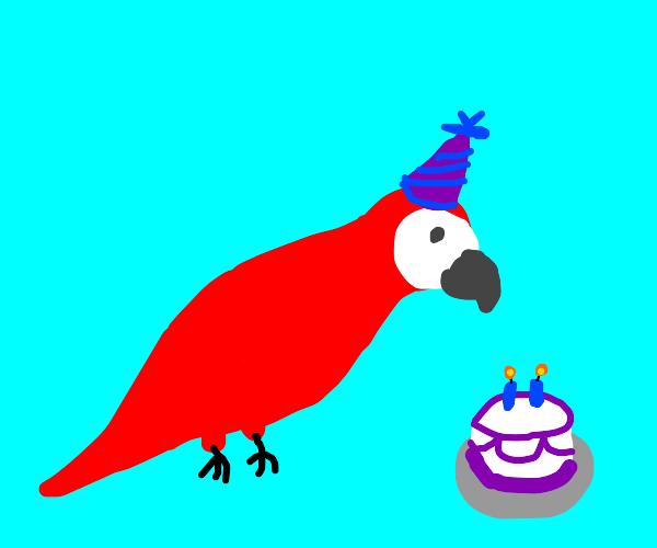Birthday boy parrot