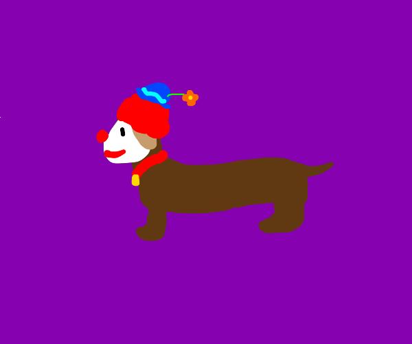 clown dog