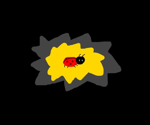 ladybug glowing in the dark
