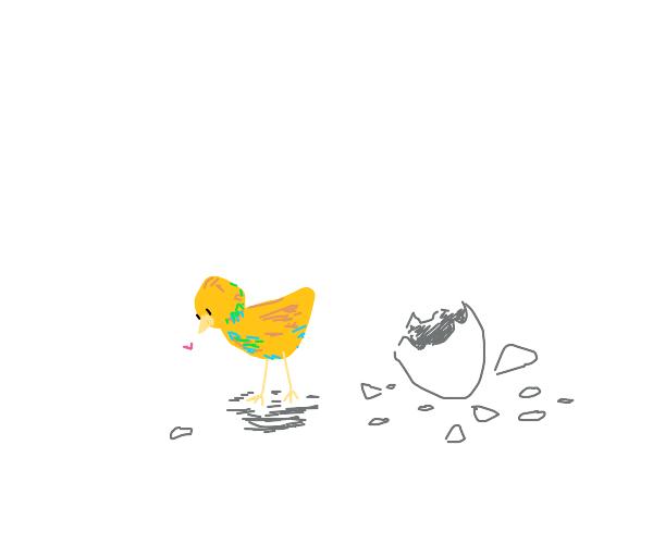A newborn duck/chick