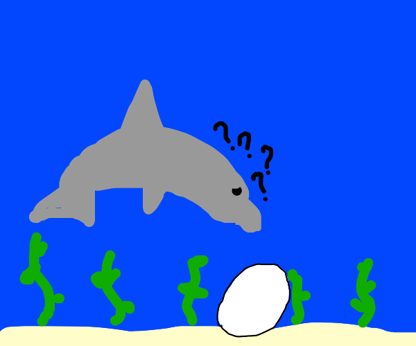 Dolphin Confused By Egg