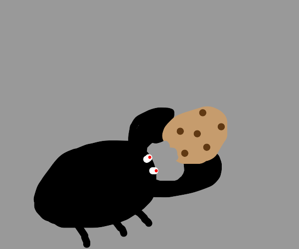 Beetle eating a cookie