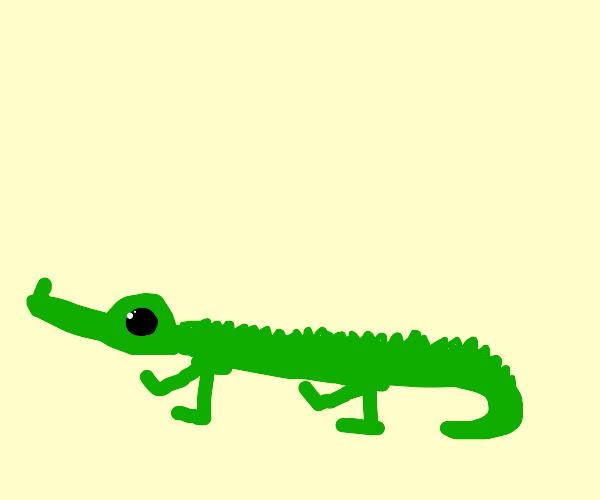 An alligator